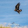 9  G Hawk