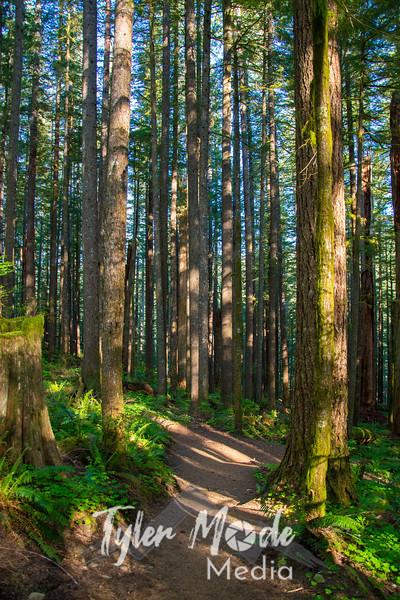 1  G Sunny Forest V