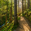 37  G Trail and Horseshoe Falls V