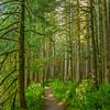10  G Sunny Forest V
