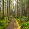 29  G Sunny Forest V