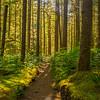 17  G Sunny Forest V