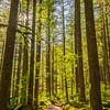 24  G Sunny Forest V