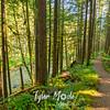 35  G Trail and Siouxon Creek