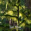 2  G Mossy Tree