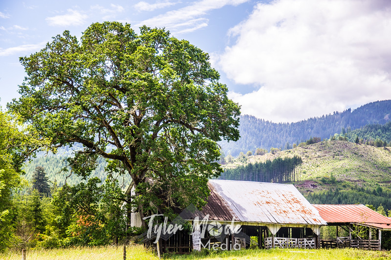 2  G Barn and Tree