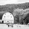 7  G Horse and Barn BW