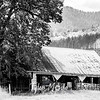 5  G Barn and Tree Close BW