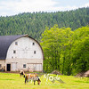 6  G Horse and Barn