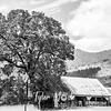 3  G Barn and Tree BW