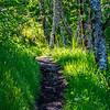 17  G Trail V