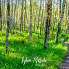 19  G Trail Through Trees