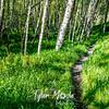18  G Trail Through Trees