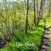 24  G Trail Near Pond