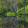 27  G Pond Reflections V
