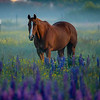 8  G Horse and Lupine