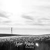 22  G Wheat and Windmill BW
