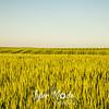 24  G Wheat