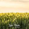 19  G Wheat
