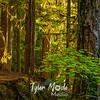 26  G Trail Through Trees