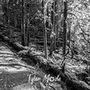 29  G Trail Through Trees BW