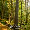 28  G Trail Through Trees