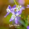 16  G Purple Flowers