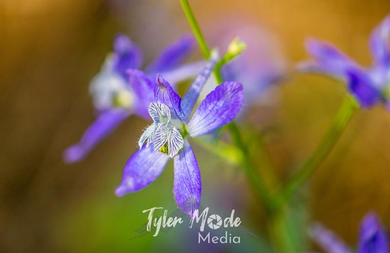 19  G Purple Flowers