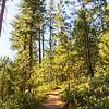 7  G Trail Up Black Butte V
