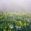16  G Trees Through Mist