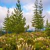 3  G Bear Grass and Trees V