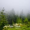 22  G Bear Grass and Mist