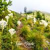 49  G Bear Grass and Trail