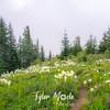 35  G Bear Grass and Trail