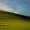20  G Wheat Fields