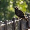33  G Vulture on Bridge