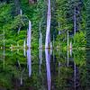 10  G June Lake Snags V
