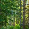 4  G Trail Through Forest V