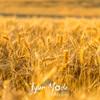54  G Wheat