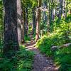 8  G Trail Forest V