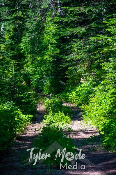 5  G Forest Road V