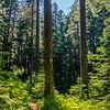 16  G Trail Through Trees V