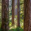 12  G Trail Through Forest V
