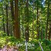 6  G Forest Scene