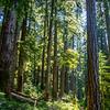 10  G Trail Through Forest V