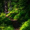 22  G Trail Through Forest V