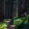 31  G Sunny Trail Through Forest V