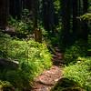 11  G Trail Through Forest V