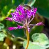 42  G Fly on Flower V