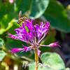 43  G Fly on Flower V